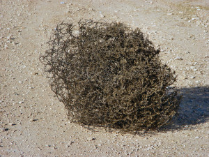 Psalm 83:13 - Make them the tumbleweed